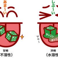 水溶性タンニンと不溶性タンニン