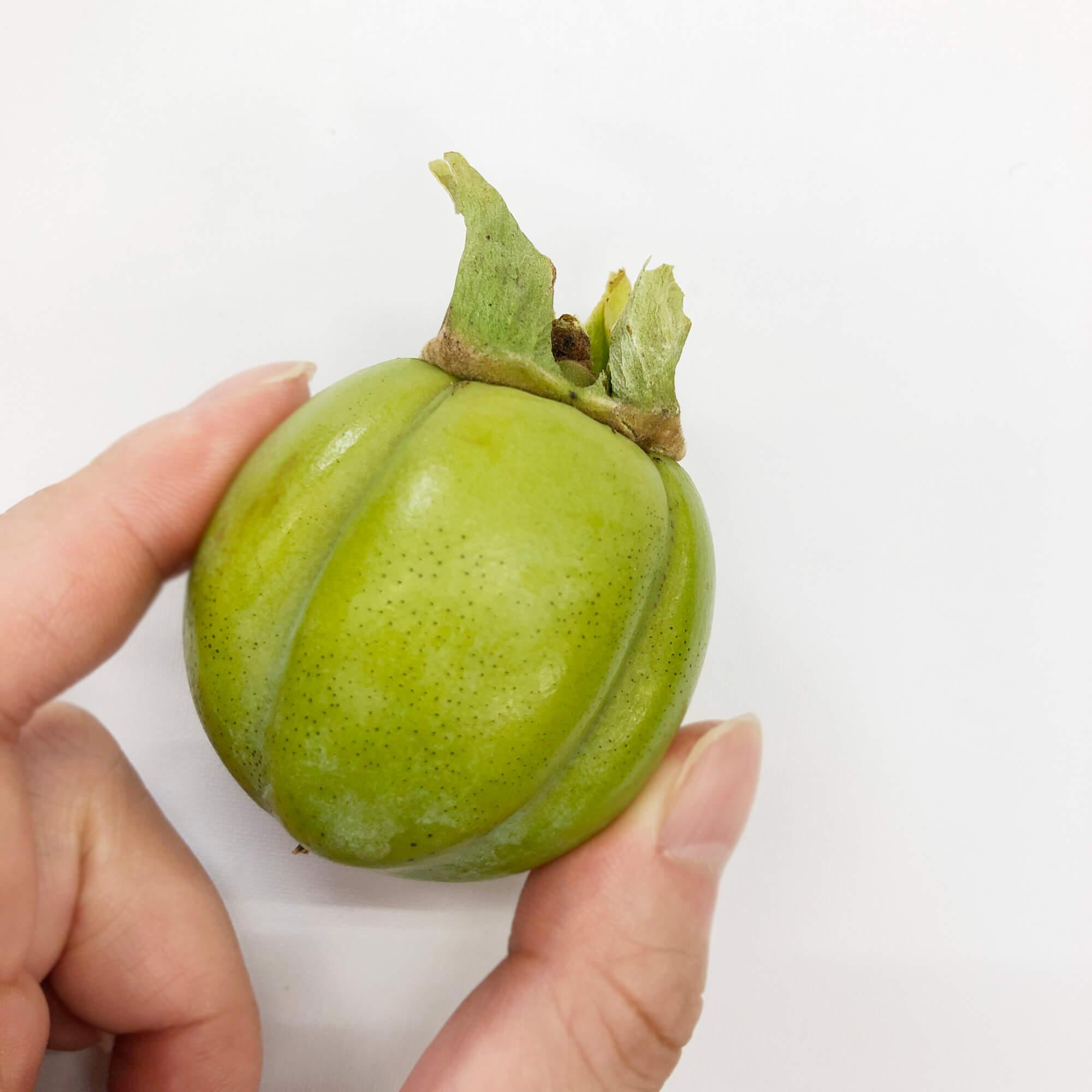 手に持ってみると小ささが分かる摘果した西条柿の渋柿