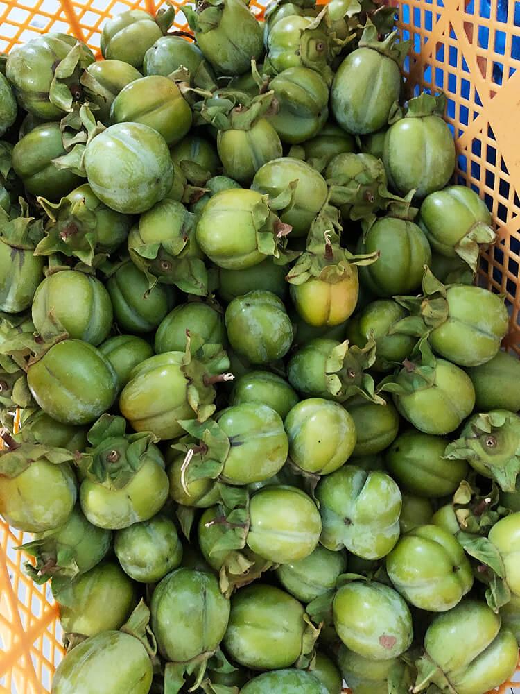 かごいっぱいの西条柿渋柿